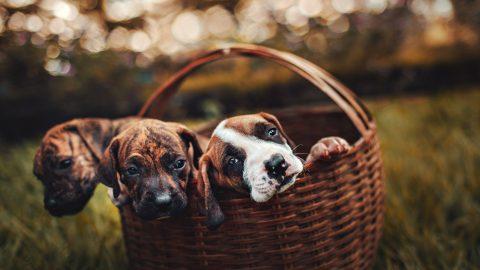 Regels bij de verkoop van huisdieren