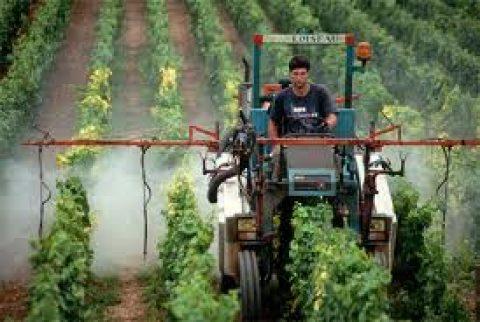Nog te veel gifstoffen in Franse wijn