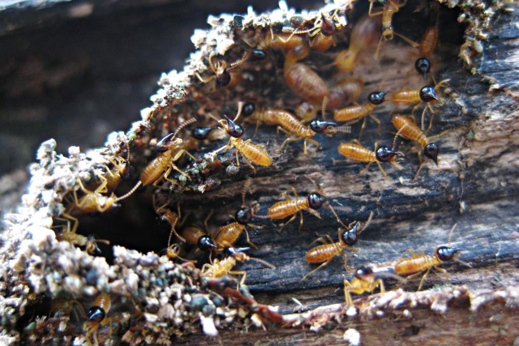 termieten